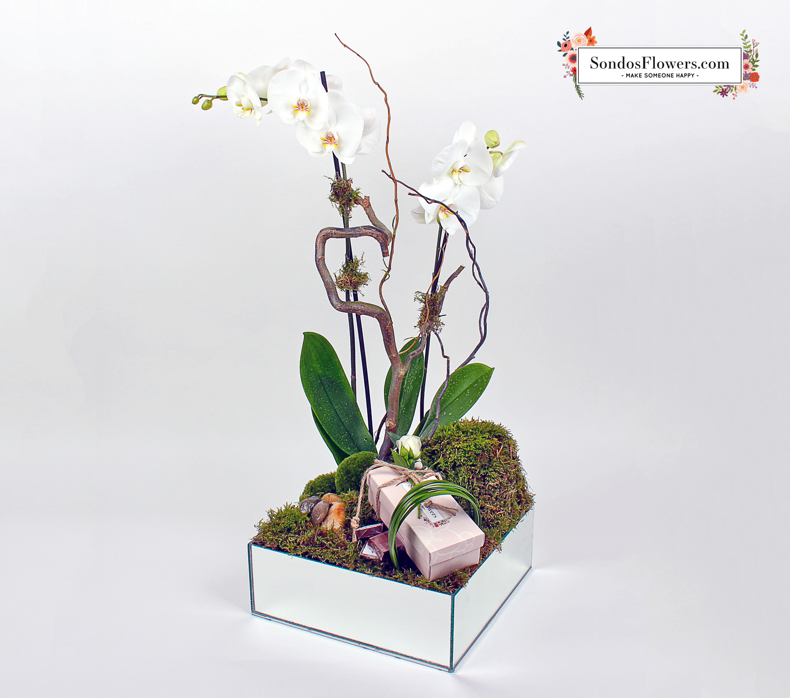 Orchidee Admirateur